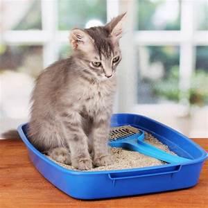 Litiere Chat Fermée : litiere chat non bruyante ~ Melissatoandfro.com Idées de Décoration