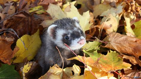 Fall Animal Wallpaper - fall with animal hd widescreen wallpapers 4010 amazing