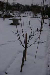 Mein Apfelbaum Anleitung : apfelbaum schneiden apfelbaum herbst apfelbaum schneiden ~ Lizthompson.info Haus und Dekorationen