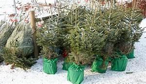 Tannenbaum Im Topf : weihnachtsbaum im topf haus ideen ~ Frokenaadalensverden.com Haus und Dekorationen