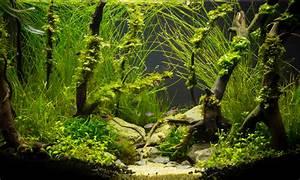 Nano Aquarium Einrichten So Planen Sie Es Richtig
