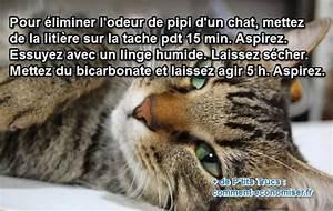 Enlever Odeur Urine Chien : le truc puissant pour liminer l 39 odeur d 39 urine de chat ~ Nature-et-papiers.com Idées de Décoration
