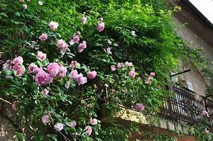 Plantes Grimpantes Pot Pour Terrasse : quelles plantes grimpantes cultiver l ombre marie claire ~ Premium-room.com Idées de Décoration