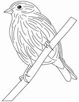Goldfinch Coloring Pages European Eastern Template Willow Sketch Cute sketch template