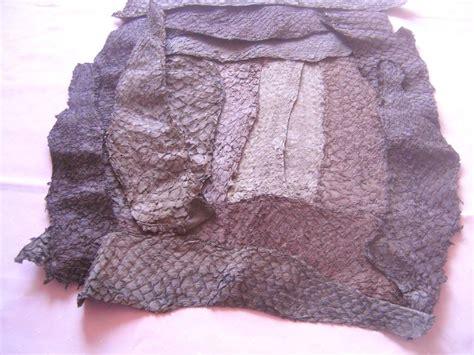 Fish Leather Stocklot Pictures Carp