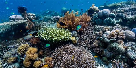 About the Reef - Florida's Coral Reef