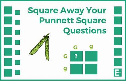 Punnett Square Digital Create Questions
