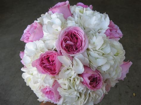 pink david roses white archives stadium flowers