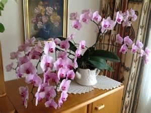 Dünger Für Orchideen : orchidee mit 65 bl ten mypianeta ~ Eleganceandgraceweddings.com Haus und Dekorationen