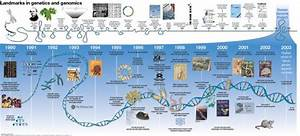 Brilliant Dna History Timeline       Nature Com