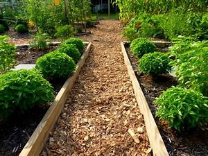 14 Best Images About Herb Gardening On Pinterest Herbs