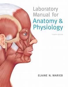 Marieb  Laboratory Manual For Anatomy  U0026 Physiology  5th