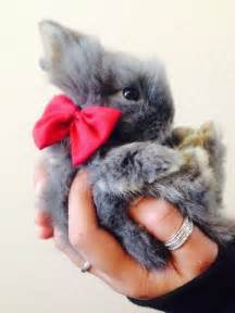 Cute Baby Bunnies with Bow