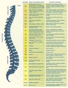 chiropractic shapiro family chiropractic