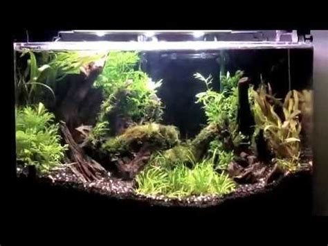 How To Aquascape A Planted Tank by How To Aquascape A Planted Aquarium With Low Light Plants