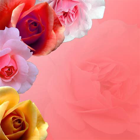 stock photo  flower border freeimageslive