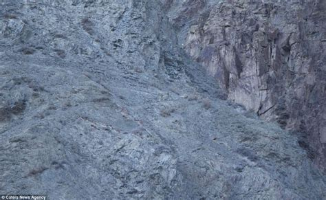 spot the predator would you know if a snow leopard was