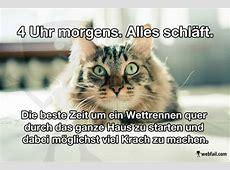 Katzenlogik Fun Bild Best Fail video, Cat and Humor ideas