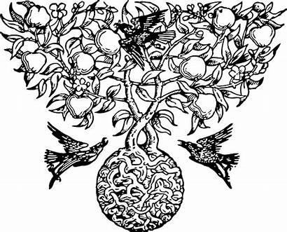 Botanical Roots Plant Pixabay Tree Vector Fruit