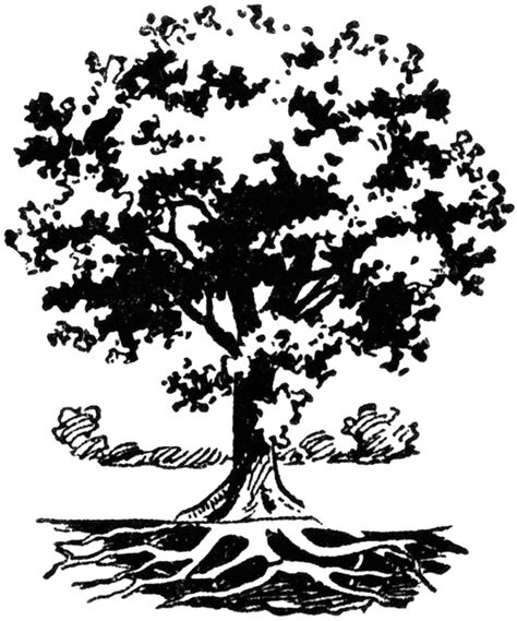 tree  roots clipart