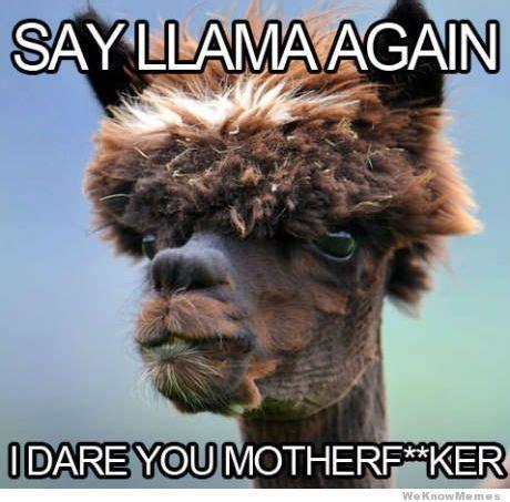 Alpaca Sheep Meme - 49 best images about alpacas on pinterest cat meme generator search and babies