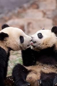 17 Photos Of Adorable Animals Kissing