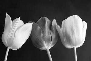 Stampa su tela tulipani in bianco e nero LivingDECO'