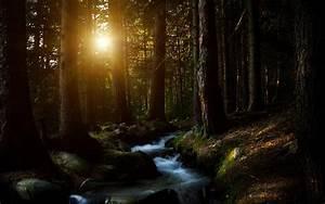Sun, Shining, Into, The, Dark, Forest, Hd, Wallpaper
