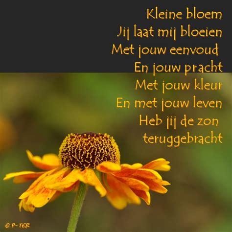 bloem gedichtje liefdesgedicht bloemen paulaclaudiakeren news