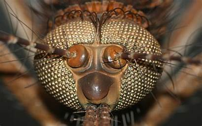 Head Insect Wallpapers Ugly Animal Desktop Animals