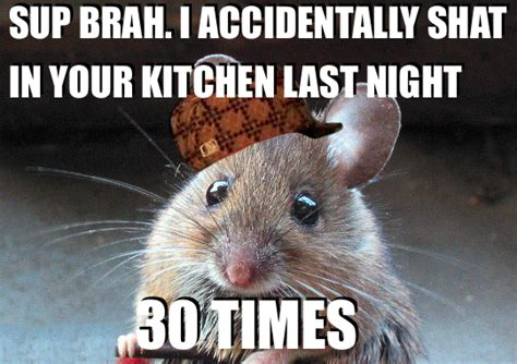 Mouse Memes - what is considered a mouse infestation k k club 2017