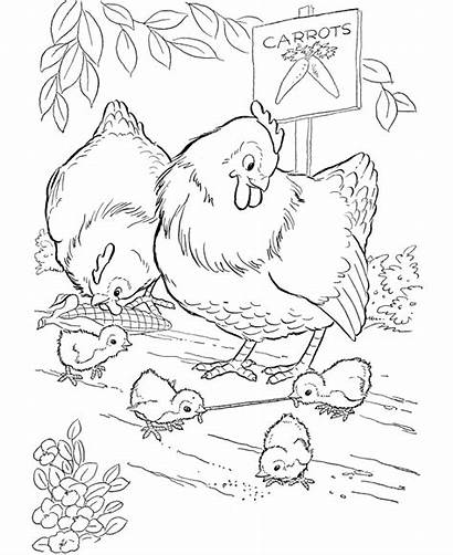Coloring Pages Farm Printable Animal Chicken Chickens