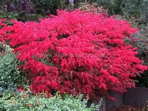 Petit Arbuste Fleuri : arbuste fleuri tout l t id e d 39 image de fleur ~ Premium-room.com Idées de Décoration