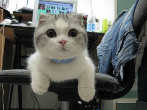 Funny Cats  Part 4 (40 Pics)  Amazing Creatures