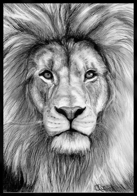 animal pencil drawings  pinterest pencil illustration