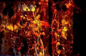 Fall, Abstract