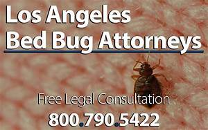 Bed bug attorney los angeles infestation lawsuit for Bed bug litigation