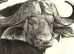 Drawings Of African Animals - Pencil Art Drawing