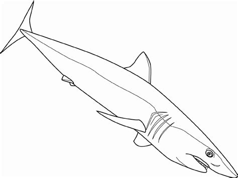Reef Shark Coloring Page Animals Town Free