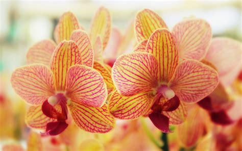 Flowers Wallpapers Free Download Zedge Best Hd Wallpapers