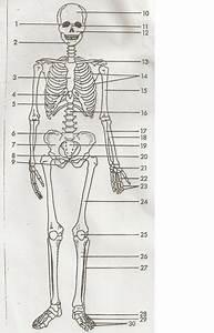 Anatomy  U0026 Physiology Final Exam