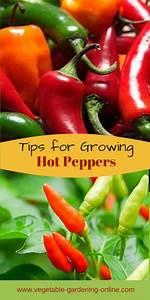 Garden Diary Planner Growing Peppers In Your Garden