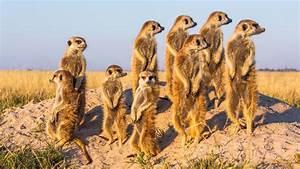 Animal En G : wacky weekend african animals ~ Melissatoandfro.com Idées de Décoration