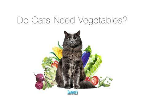 cat  vegetables