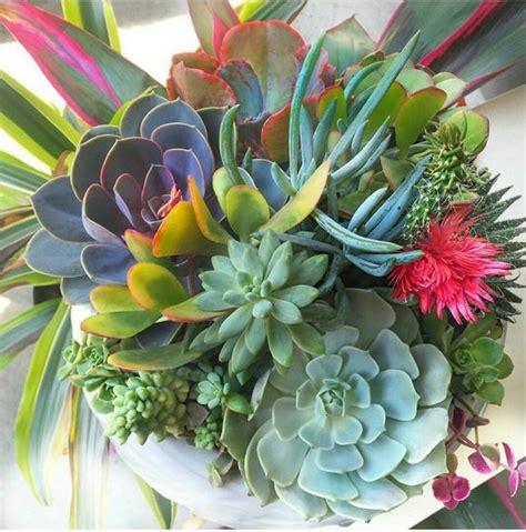 Garden Beautiful Succulents by Colorful Succulent Grouping Succulents Cactus Sedum