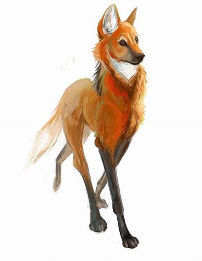Wolf Maned Drawing Drawings Deviantart Animal Transparent