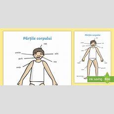 Părțile Corpului Uman  Planșă A4