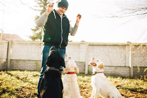 Top 10 pet insurance 2020updated november, 2020. Round-table: Pet Insurance Policies: that the condition of this Economy in 20-19 | Successful ...