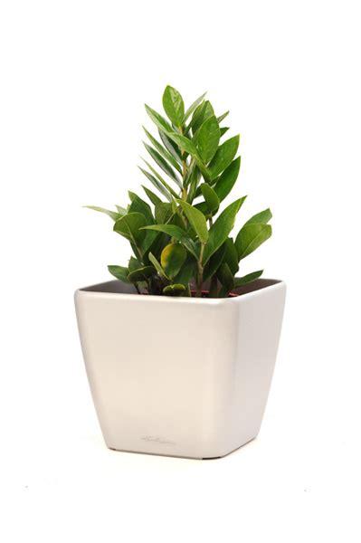 indoor plants perth