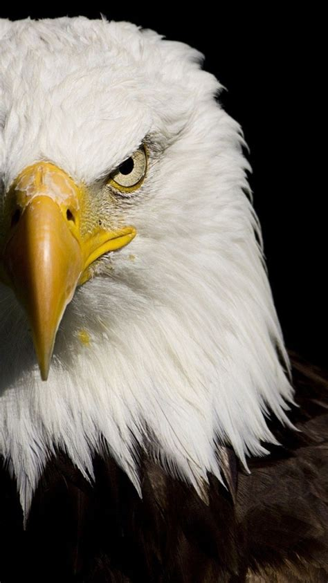 american eagle desktop wallpapers top  american
